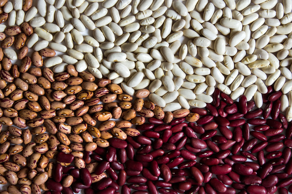 The Types of Beans You Need to Grow in Your Garden Now
