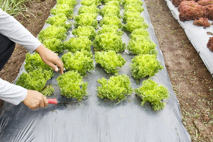 a weed barrier is one of the many tools out there in gardening this is the best tool to prevent the weed from taking over your garden - Weed Barrier