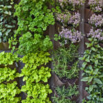 9 FACTORS TO CONSIDER WHEN COMPANION PLANTING HERBS