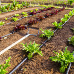 Garden Irrigation Systems