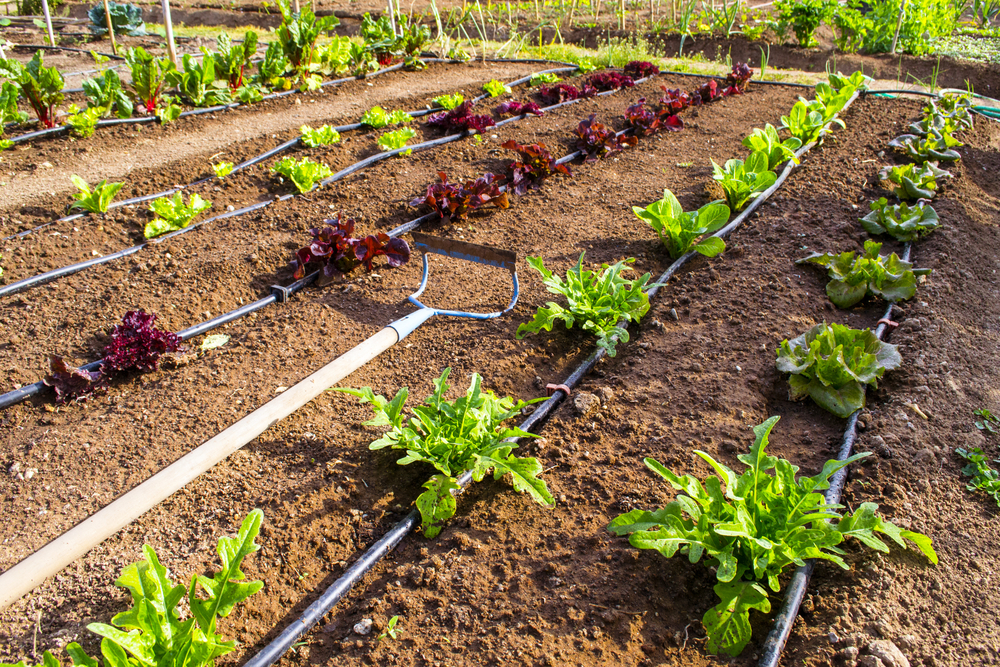 The most modern and useful irrigation systems for your garden for Home garden drip irrigation design