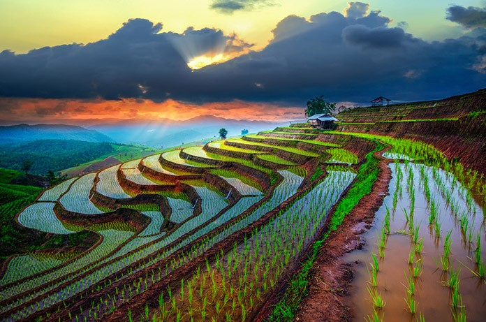Terraced Irrigation