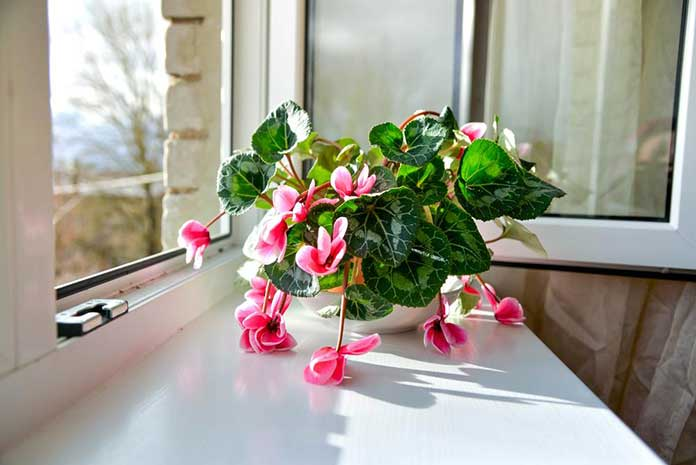 10 Flowering Houseplants That Are Easy To Grow And Care For